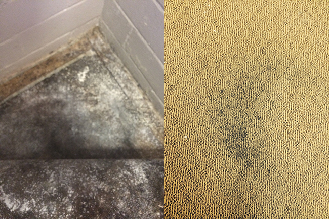 Mould In Carpet After Water Damage Emergency Mould