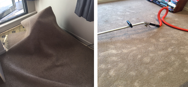 Sydney prevent and treat mould in carpets