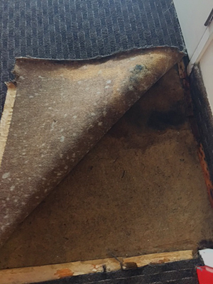 treating mould after carpet water damage